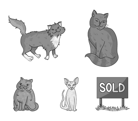 Sphinx, nibelung,norwegian forest cat and other species. Cat breeds set collection icons in monochrome style vector symbol stock illustration web.