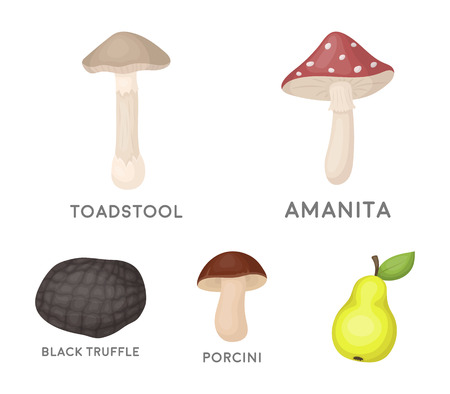 Amanita, porcini, black truffle,toadstool. set collection icons in cartoon style vector symbol stock illustration web.