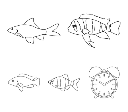 Botia, clown, piranha, cichlid, hummingbird, guppy,Fish set collection icons in outline style vector symbol stock illustration web.