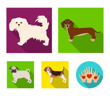 Dachshund, Maltese, bulldog icons in set collection.