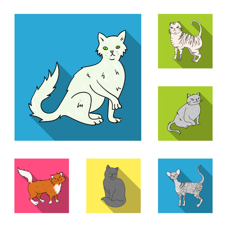 Breeds of cats flat icons in set collection for design. Pet cat vector symbol stock illustration. Illustration