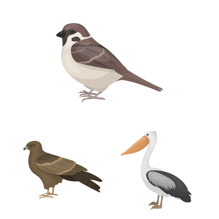 Types of birds cartoon icons in set collection for design. Home and wild bird vector symbol stock web illustration.
