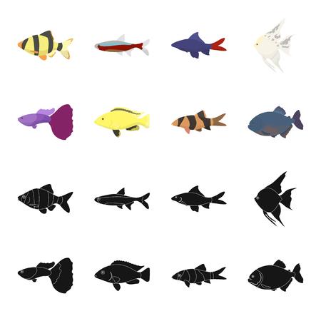 Botia, clown, piranha, cichlid, hummingbird, guppy,Fish set collection icons in black,cartoon style vector symbol stock illustration web. Illustration