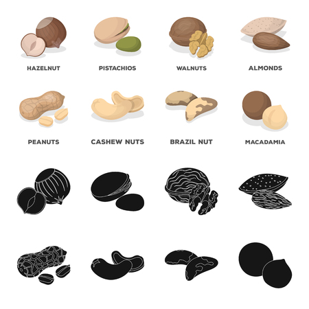 Peanuts, cashews, brazil nuts, macadamia. Different kinds of nuts set collection icons in black, cartoon style vector symbol stock illustration Vettoriali