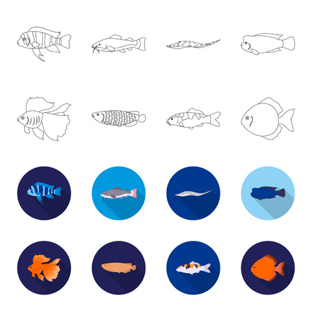Discus, gold, carp, koi, scleropages, fotmosus. Fish set collection icons in outline, flat style vector symbol stock illustration