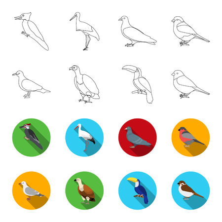 Gull, toucan and other species. Birds set collection icons in outline,flet style vector symbol stock illustration web.
