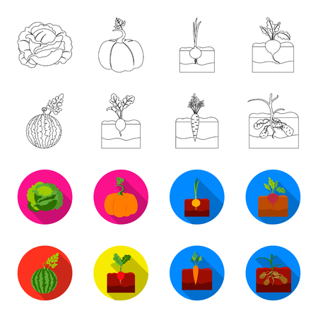 Watermelon, radish, carrots, potatoes. Plant set collection icons in outline,flet style vector symbol stock illustration web.