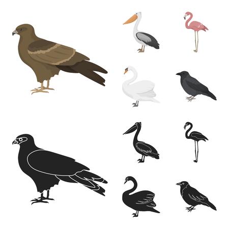Kite, pelican, flamingo, swan. Birds set collection icons in cartoon,black style vector symbol stock illustration web. Ilustração