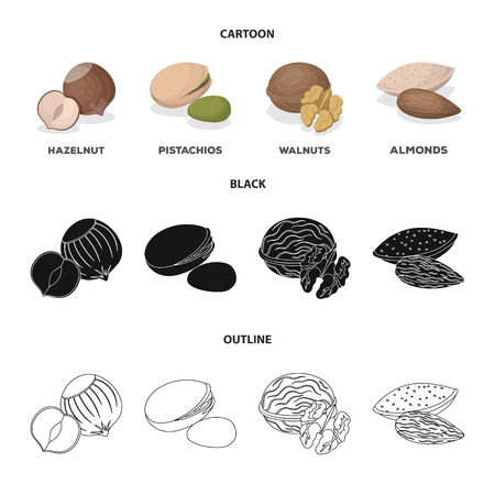 Hazelnut, pistachios, walnut, almonds.Different kinds of nuts set collection icons in cartoon,black,outline style vector symbol stock illustration .