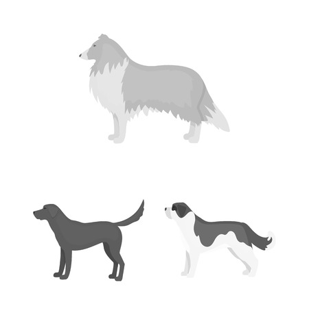 Dog breeds monochrome icons in set collection for design. Dog pet vector symbol stock web illustration.