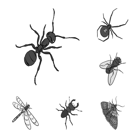 Different kinds of insects monochrome icons in set collection for design. Insect arthropod vector isometric symbol stock web illustration. Ilustração