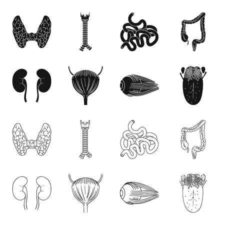 Human organs set collection icons in black,outline style vector symbol stock illustration web.