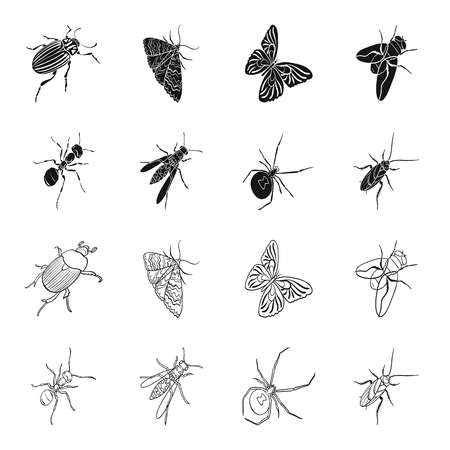 An insect arthropod, an osa, a spider, a cockroach. Insects set collection icons in black,outline style vector symbol stock isometric illustration web. Ilustração