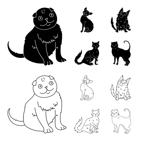 Turkish Angora, British longhair and other species. Cat breeds set collection icons in black,outline style vector symbol stock illustration web. Stockfoto - 97714855