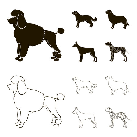 St. Bernard, retriever,doberman, labrador. Dog breeds set collection icons in black,outline style vector symbol stock illustration web. Illustration