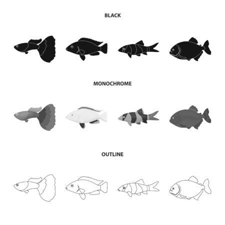Fish set collection icons in black, outline style vector symbol stock illustration web.