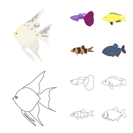 Fish set collection illustration