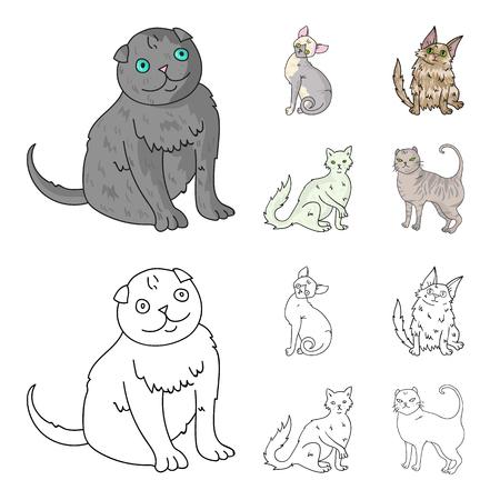 Kitten breeds set collection illustration