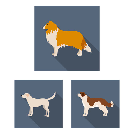 Dog breeds flat icons in set collection for design.Dog pet vector symbol stock web illustration.