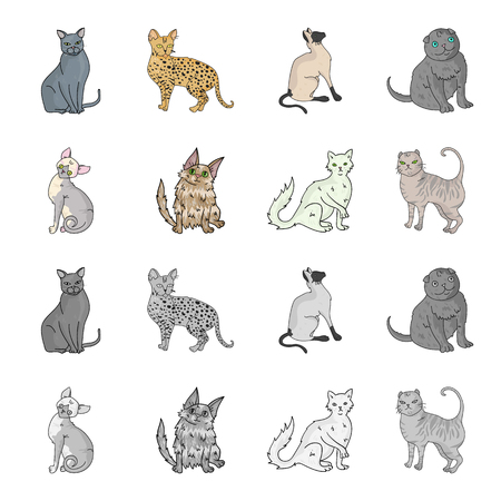 Turkish Angora, British longhair and other species. Cat breeds set collection icons in cartoon,monochrome style vector symbol stock illustration web.
