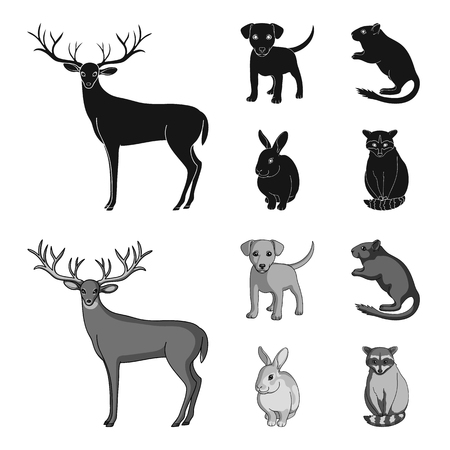 Puppy, rodent, rabbit and other animal species.Animals set collection icons in black,monochrom style vector symbol stock illustration .