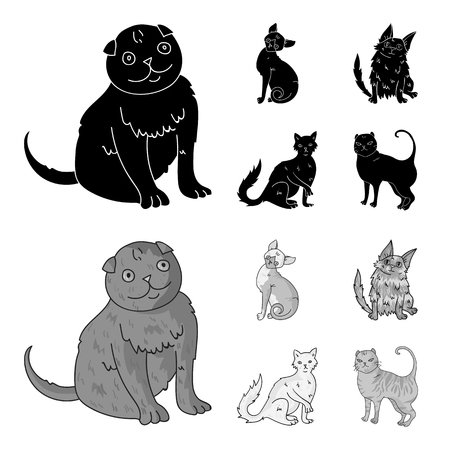 Turkish Angora, British longhair and other species. Cat breeds set collection icons in black,monochrom style vector symbol stock illustration .
