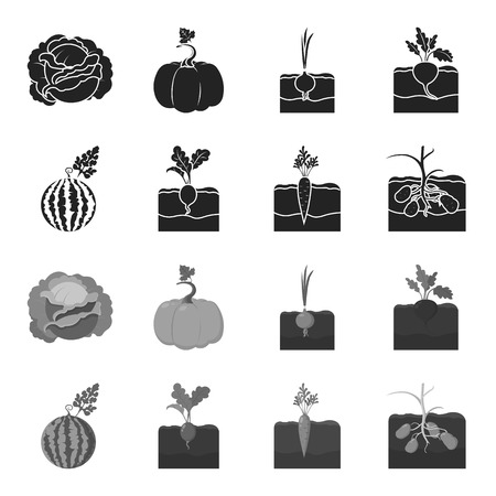 Plant set collection icons vector symbol stock illustration web.