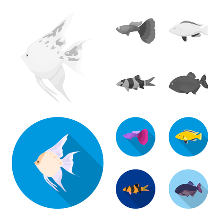 Botia, clown, piranha, cichlid, hummingbird, guppy,Fish set collection icons in monochrome,flat style vector symbol stock illustration web. Illustration