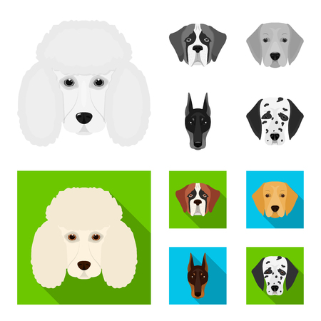 Muzzle of different breeds of dogs.Dog of the breed St. Bernard, golden retriever, Doberman, Dalmatian set collection icons in monochrome,flat style vector symbol stock illustration web.
