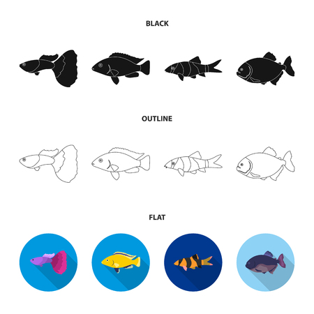 Botia, clown, piranha, cichlid, hummingbird, guppy,Fish set collection icons in black,flat,outline style vector symbol stock illustration web. Illustration