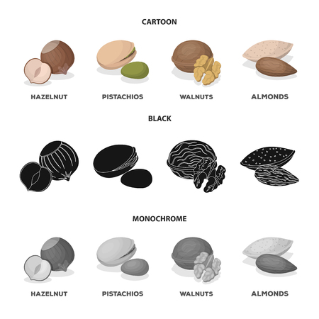 Hazelnut, pistachios, walnut, almonds.Different kinds of nuts set collection icons in cartoon,black,monochrome style vector symbol stock illustration web.