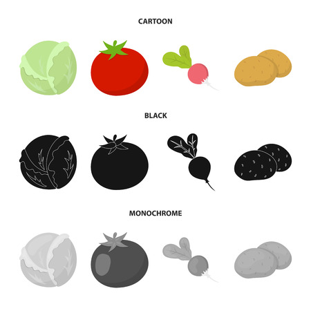 Cabbage white, tomato red, rice, potatoes. Vegetables set collection icons in cartoon,black,monochrome style vector symbol stock illustration web.