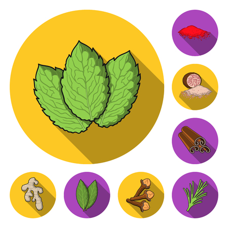 Herb and spices flat icons in set collection for design.Different kinds of seasonings vector symbol stock web illustration.