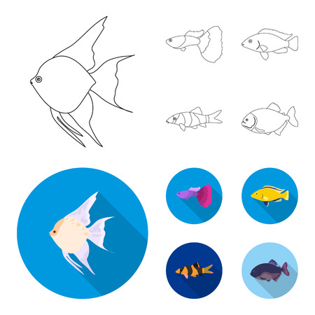 Botia, clown, piranha, cichlid, hummingbird and guppy. Fish set collection icons in outline,flat style vector symbol stock illustration web. Illustration