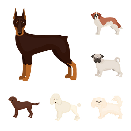Dog breeds cartoon icons in set collection for design.Dog pet vector symbol stock web illustration.