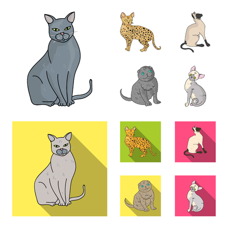 Siamese and other species. Cat breeds set collection icons in cartoon,flat style vector symbol stock illustration web.