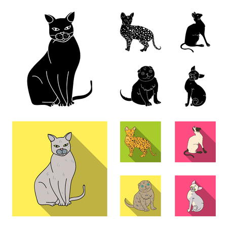 Siamese and other species. Cat breeds set collection icons in black, flat style vector symbol stock illustration web.