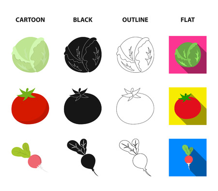 Cabbage white, tomato red, rice and potatoes. Vegetables set collection icons in icons in cartoon, black, outline, flat style vector symbol stock illustration web.