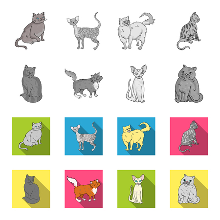 Sphinx, nibelung,norwegian forest cat and other species. Cat breeds set collection icons in monochrome,flat style vector symbol stock illustration web. Illustration