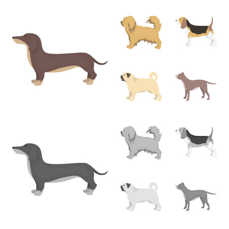 Pikinise, dachshund, pug, peggy. Dog breeds set collection icons in cartoon,monochrome style vector symbol stock illustration web.