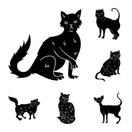 Breeds of cats black icons in set collection for design. Pet cat vector symbol stock  illustration.