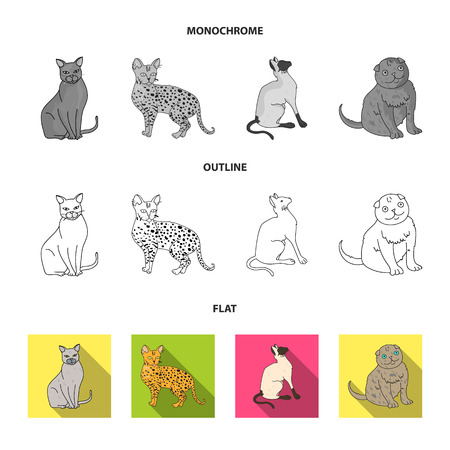 Turkish Angora, British longhair and other species. Cat breeds set collection icons in flat,outline,monochrome style vector symbol stock illustration .