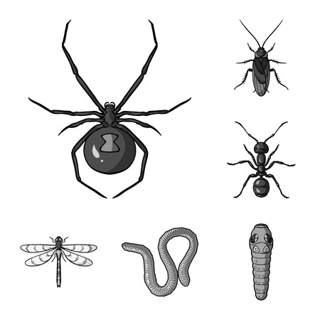 Different kinds of insects monochrome icons in set collection for design. Insect arthropod vector symbol stock web illustration.
