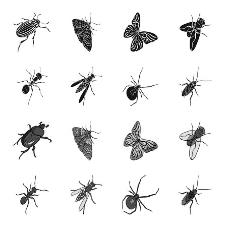 An insect arthropod, an osa, a spider, a cockroach. Insects set collection icons in black,monochrome style vector symbol stock isometric illustration web.