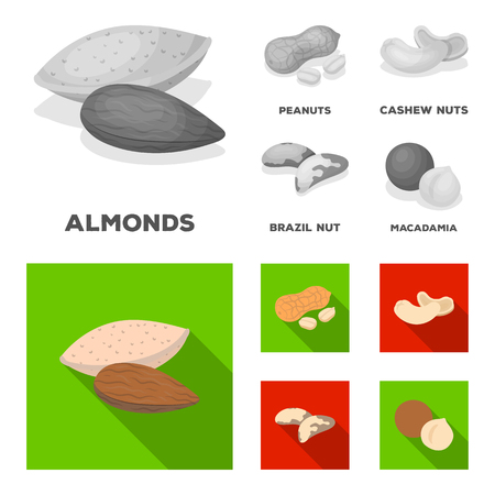 Peanuts, cashews, Brazil nuts, macadamia. Different kinds of nuts set collection icons in monochrome, flat style vector symbol stock illustration web.
