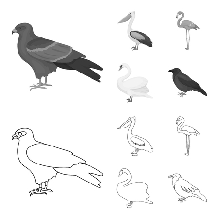 Kite, pelican, flamingo, swan. Birds set collection icons in outline, monochrome style vector symbol stock illustration web. Illustration