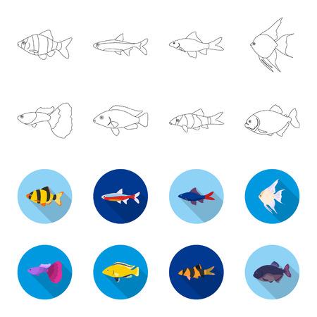 Botia, clown, piranha, cichlid, hummingbird, guppy,Fish set collection icons in outline,flat style vector symbol stock illustration
