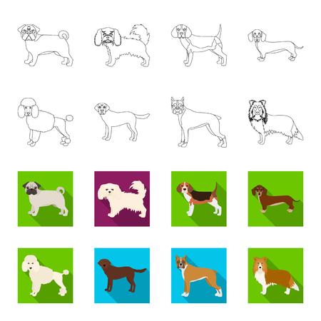 Dog breeds outline,flet icons in set collection for design.Dog pet vector symbol stock  illustration. Stock Illustratie