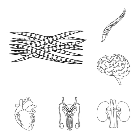 Internal organs of a human outline icons in set collection for design. Anatomy and medicine vector symbol stock web illustration.
