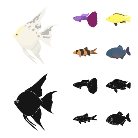 Fish set collection icons in cartoon,colored and black style vector symbol stock illustration web. Illustration